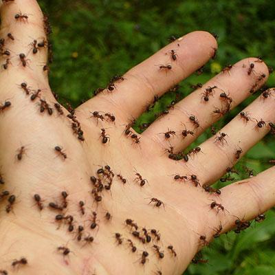 ants-pest-control-bathurst-online