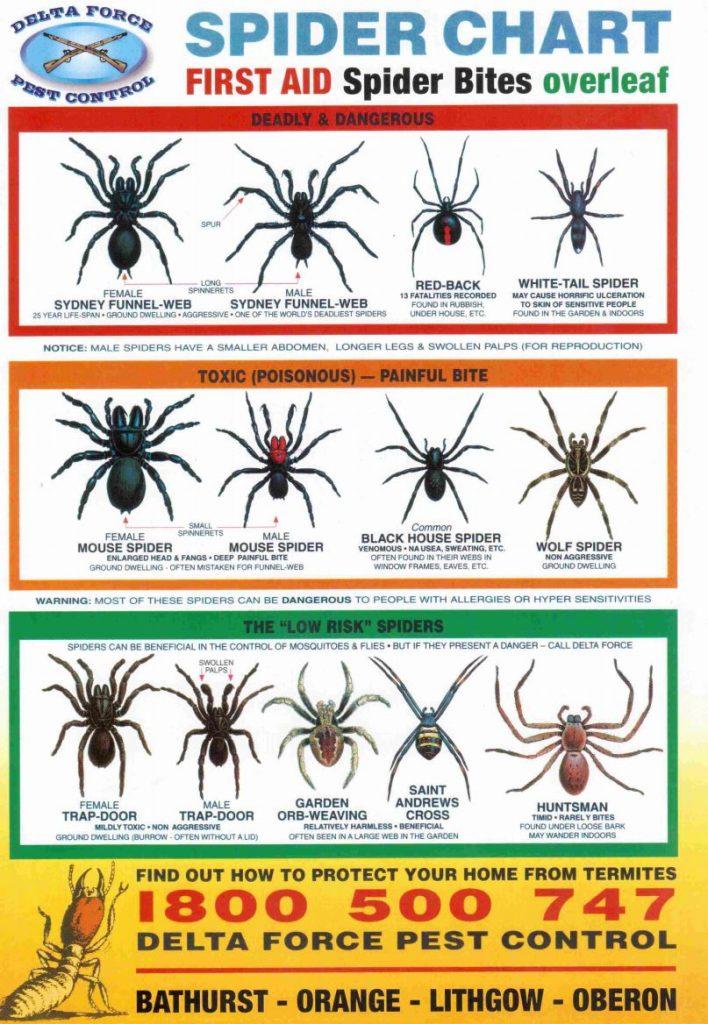 spider-chart